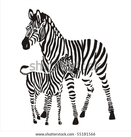 zebras - stock vector