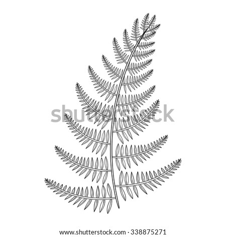 fern coloring pages - photo#26