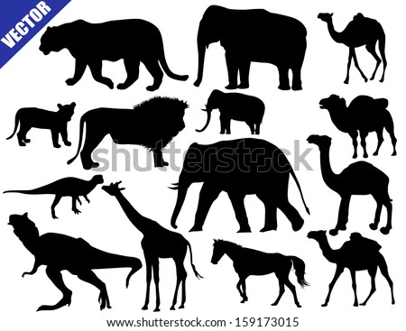 Zoo animals collection on white background, vector illustration